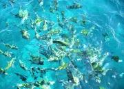 snorkeling koh weah